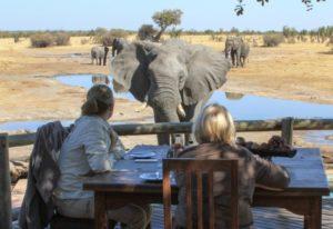 pool elephants