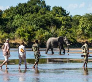 walking safari.1